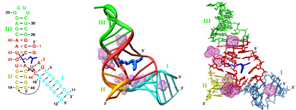 Tertiary Structure